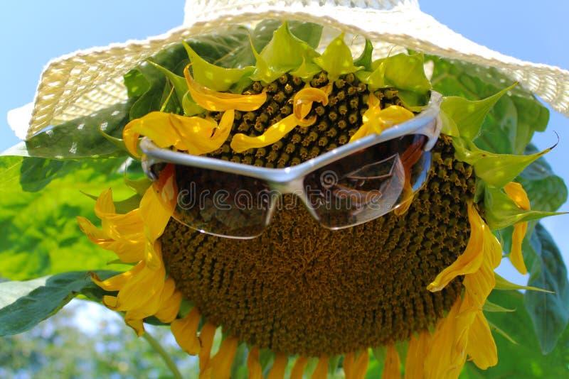 Download Tournesol drôle photo stock. Image du jaune, fleur, chapeau - 76079846