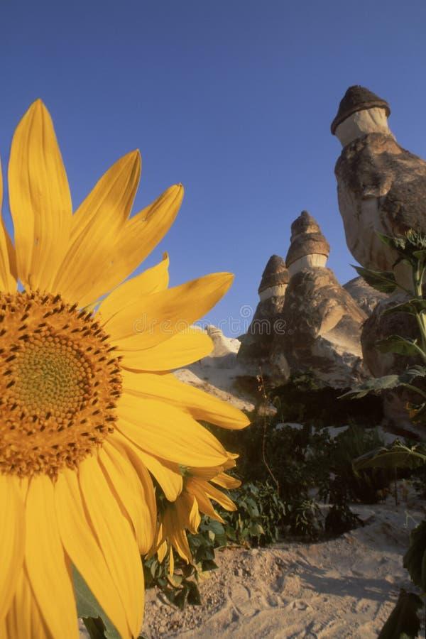Tournesol et formations de roche féeriques de cheminée dans Cappadocia photos libres de droits