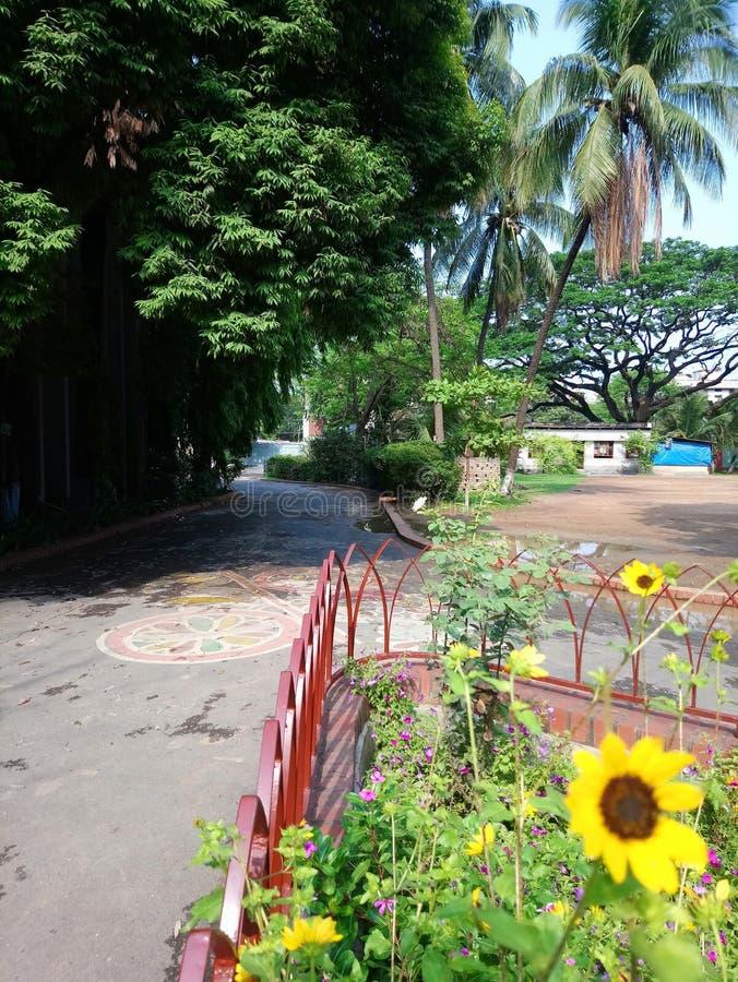 Tournesol et palmiers images libres de droits