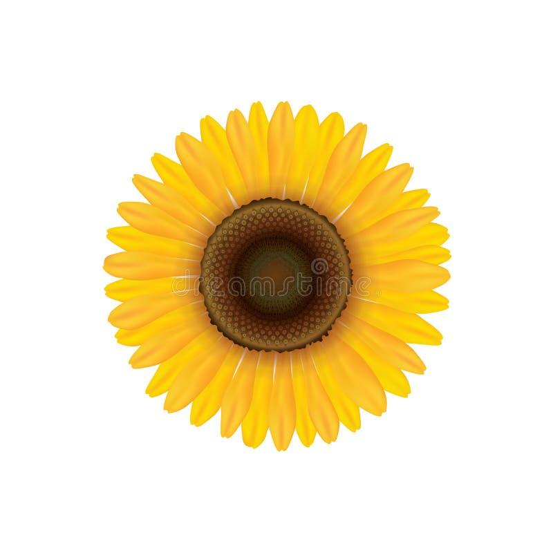 Tournesol Fleur d'été d'isolement illustration stock