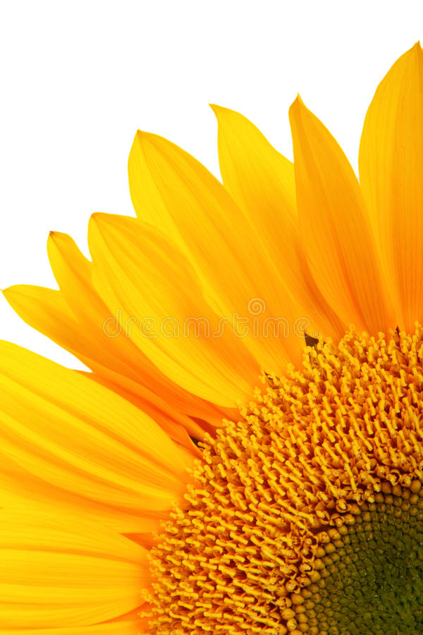 tournesol jaune images stock