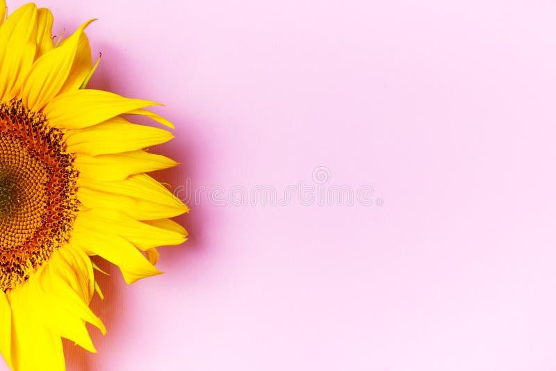 Tournesols jaunes sur le fond rose avec l'espace de copie Vue sup?rieure images stock