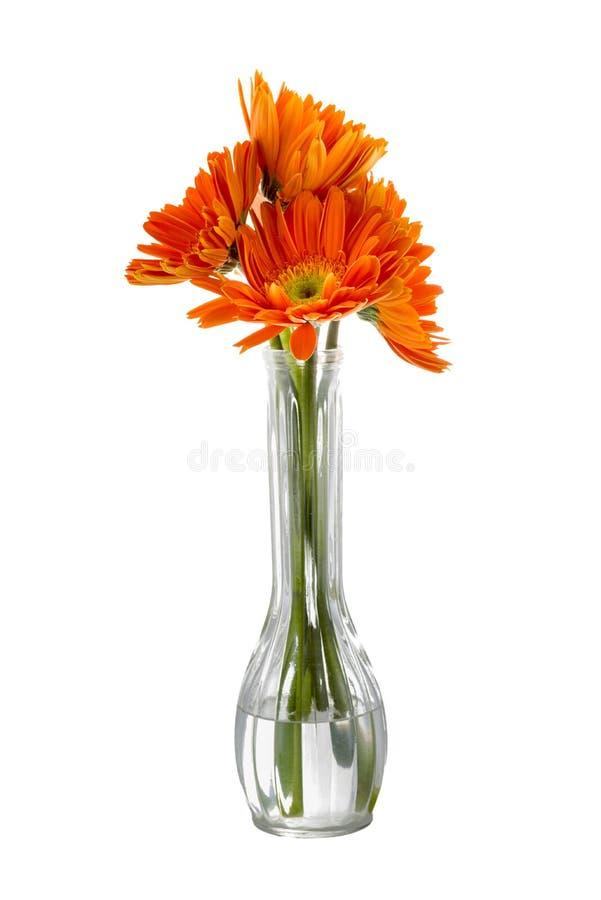 tournesols Rougeâtre-oranges dans un vase photographie stock libre de droits