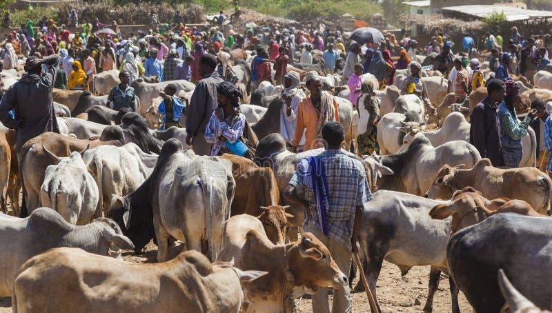 Touro do brâmane, gebo e o outro gado em um do mercado o maior dos rebanhos animais do chifre de países de África Babile etiópia foto de stock royalty free