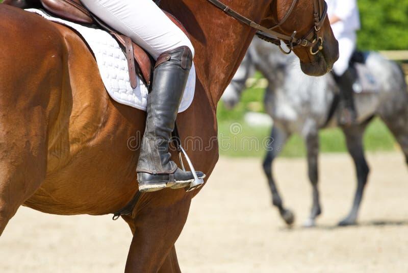 Tours de cheval de dressage image stock