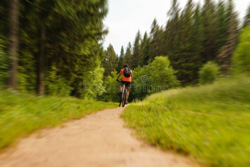 Tours de cycliste le long d'un chemin forestier image stock