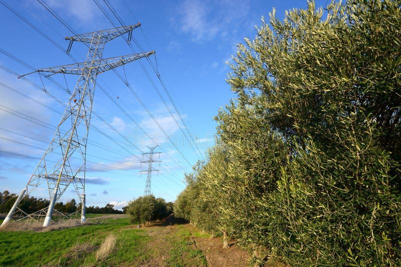 Tours de l'électricité et oliviers photos libres de droits