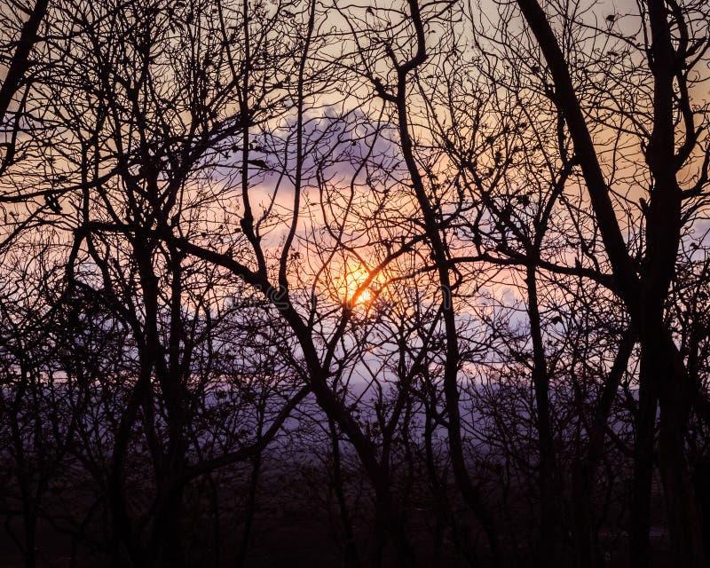 Tousands gałąź od nieżywego lasu przy świtem zdjęcie stock