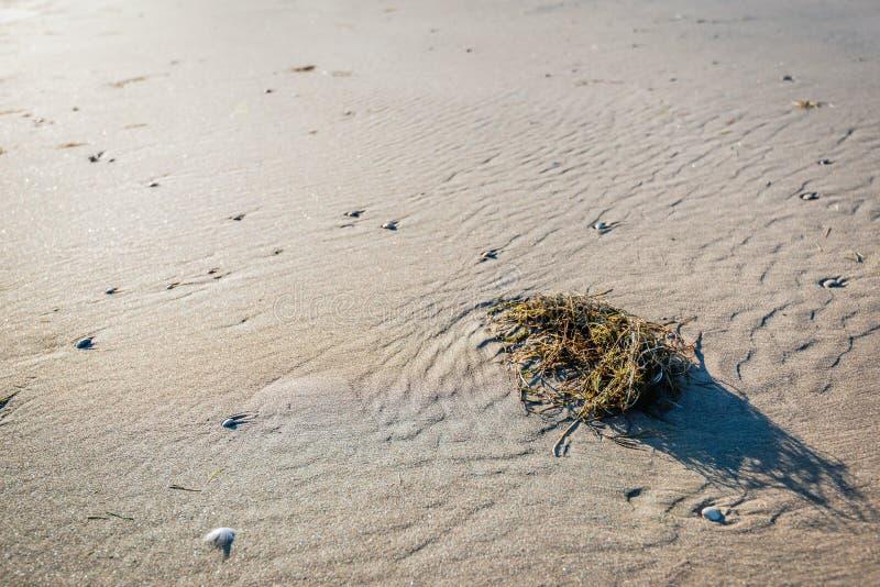 Tova av växtmaterial tvättade sig upp på stranden arkivbilder