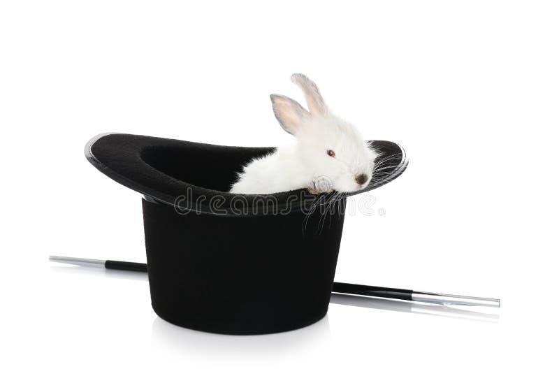 Tovenaarhoed met leuk konijn op witte achtergrond royalty-vrije stock afbeeldingen