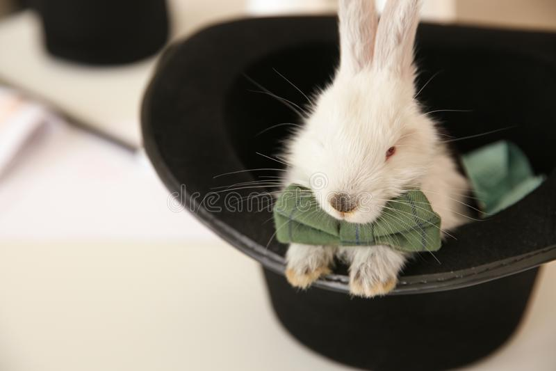 Tovenaarhoed met leuk pluizig konijn op lijst royalty-vrije stock foto's