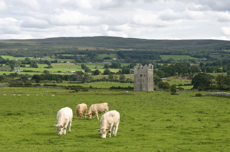 Download Tower in Ireland with cows stock photo. Image of built - 6403470