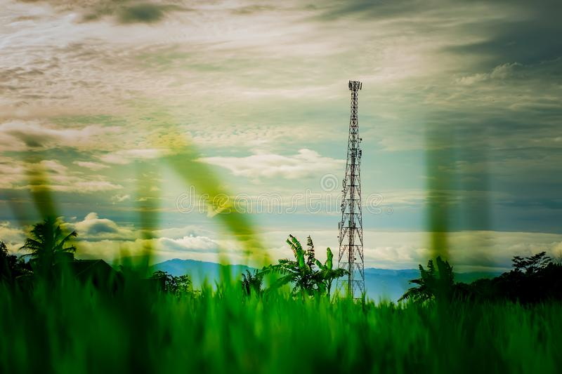 Tower and Rice Field royalty free stock images