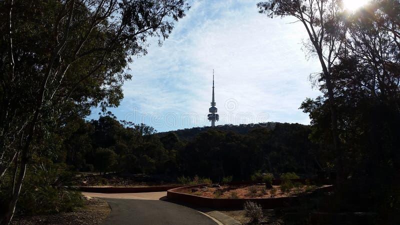 towering royaltyfri bild