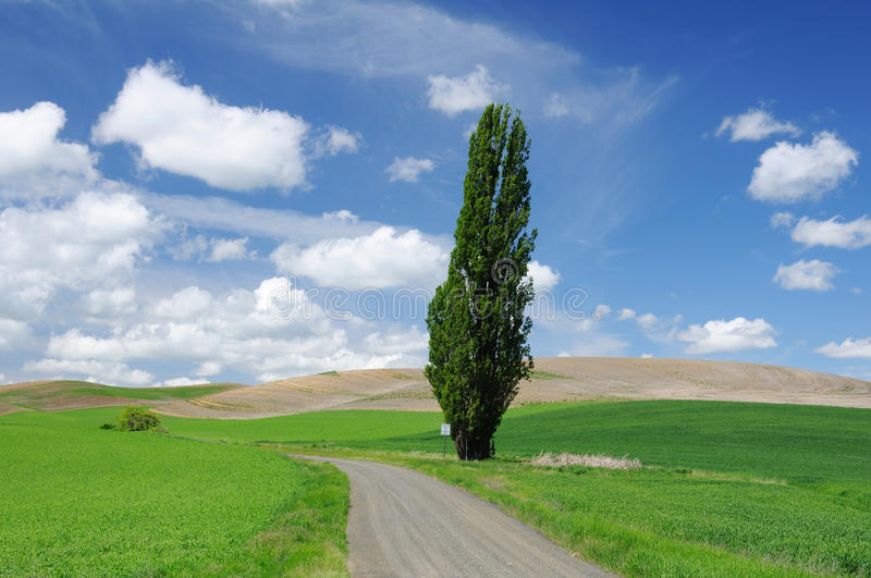 Download Towering tree stock image. Image of path, green, plant - 19855391
