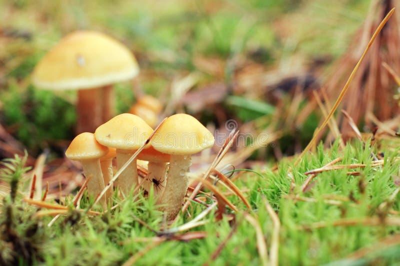 Toxic mushrooms stock photo