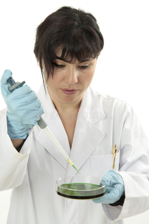 Toxicology investigation. Scientist or lab technician performing research in a alb royalty free stock photo