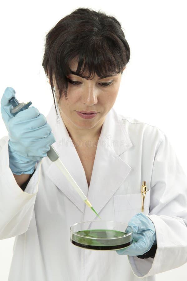 Toxikologieuntersuchung lizenzfreies stockfoto