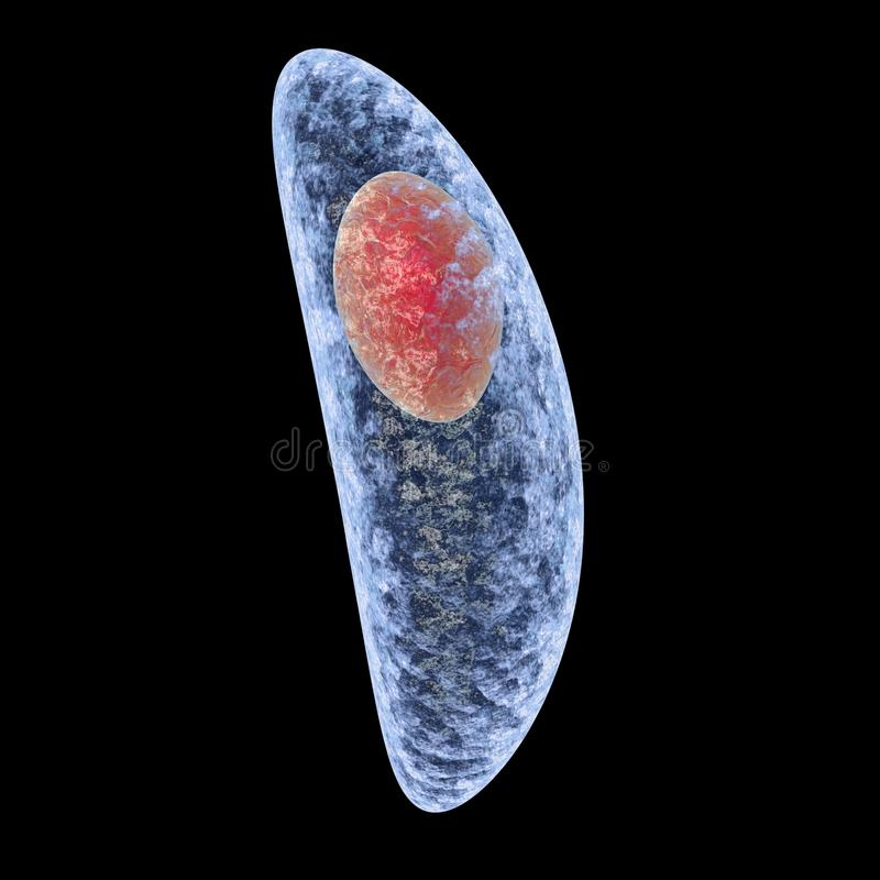 Toxoplasma gondii isolated on black background royalty free illustration