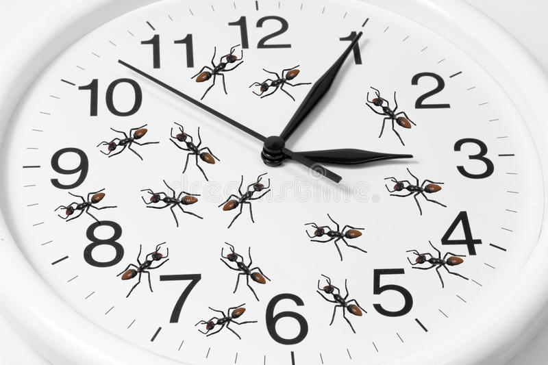 Download Toy Ants on Clock stock photo. Image of cooperation, timing - 28035546