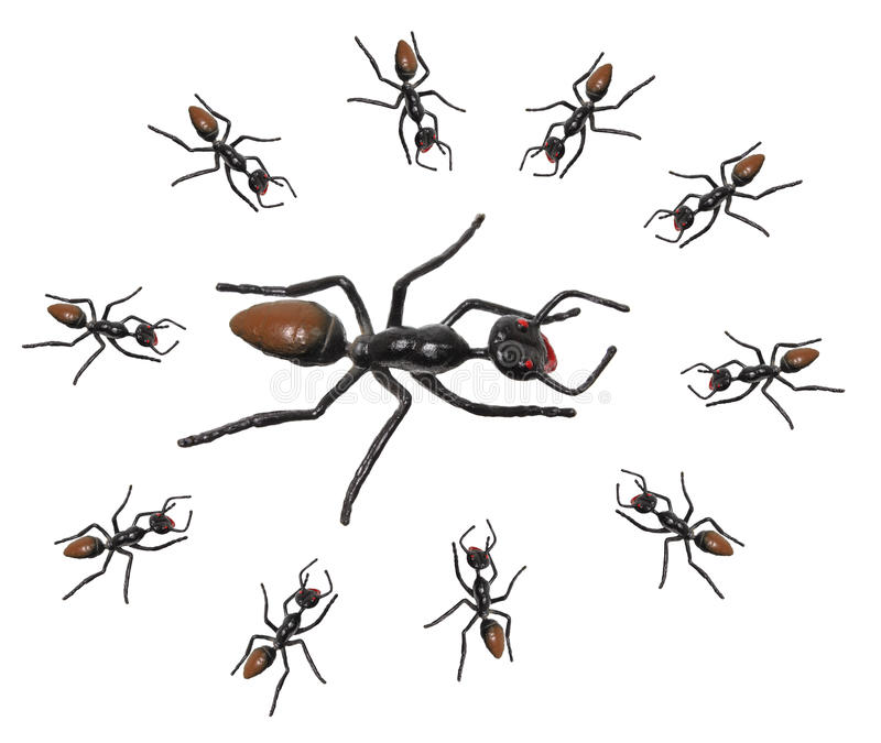 Toy Ants. On White Background royalty free stock photography
