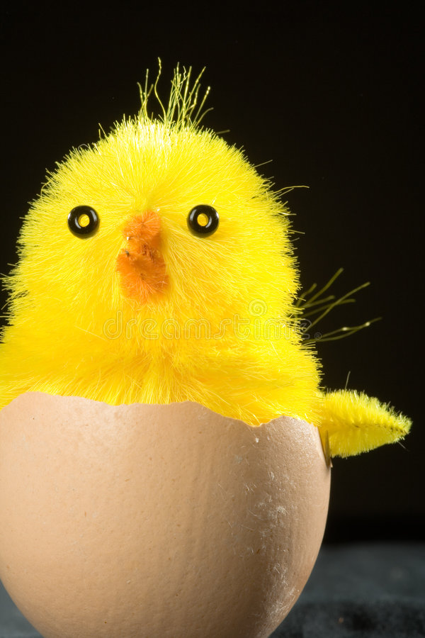 Download Toy Chick in Egg Shell stock image. Image of black, made - 2102329