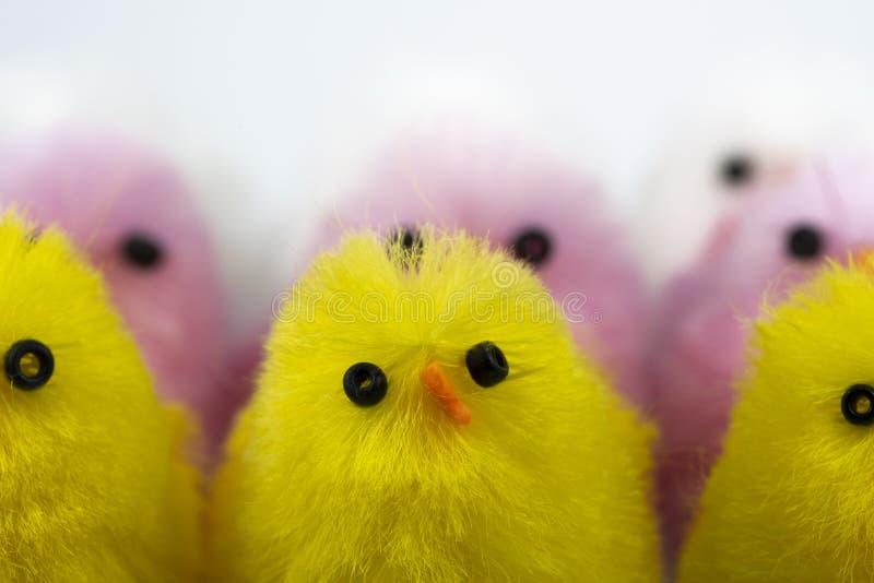 Toy Chicks lizenzfreie stockfotos