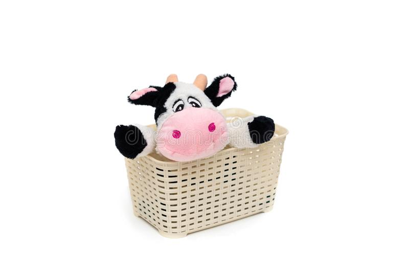 Toy cow looks out of the basket royalty free stock photos