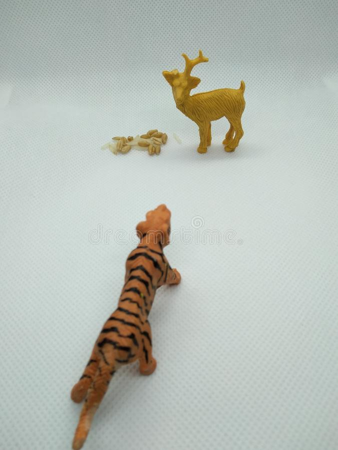 Toy deer looking at toy tiger. Toy deer while having its food, wheat and rice, looking at toy tiger coming from a distance stock photos
