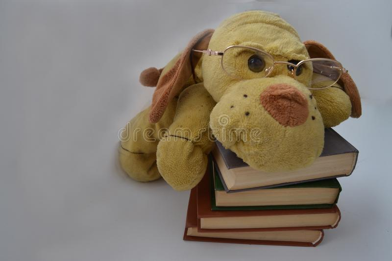 Toy dog with glasses is lying on the books. royalty free stock photography