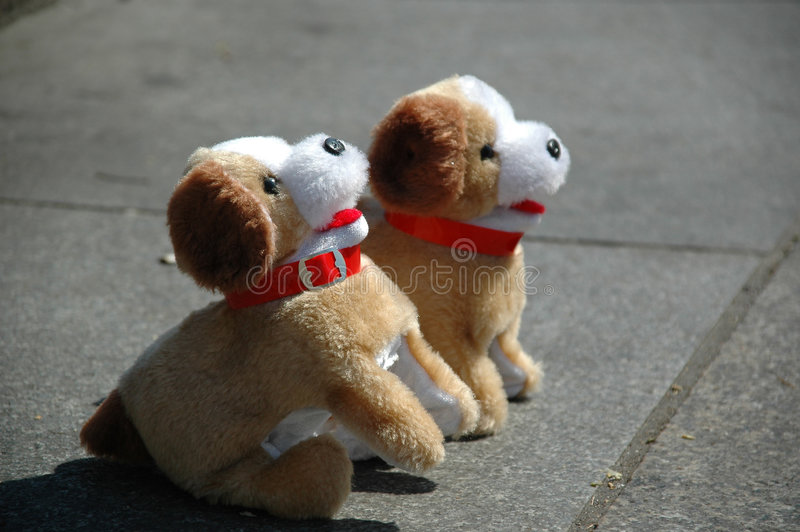 Download Toy Dogs Stock Photos - Image: 1700233