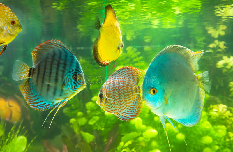 Toy Fish Stock Images