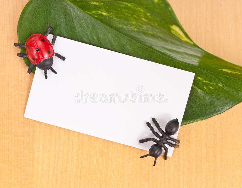 Toy Insects with Blank Card. On Leaf stock images