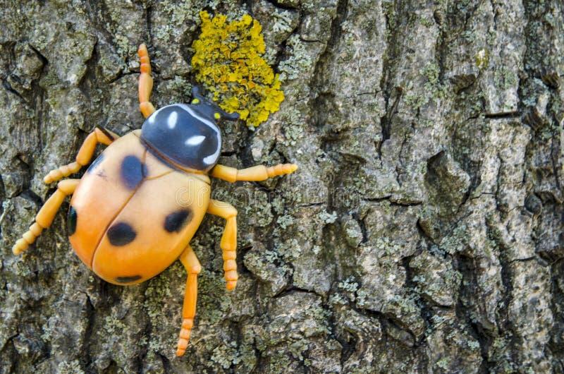Ladybug on a tree. A toy of ladybug. stock images