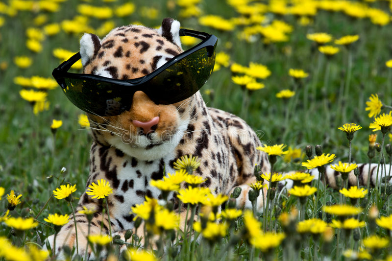 Toy Leopard stock image