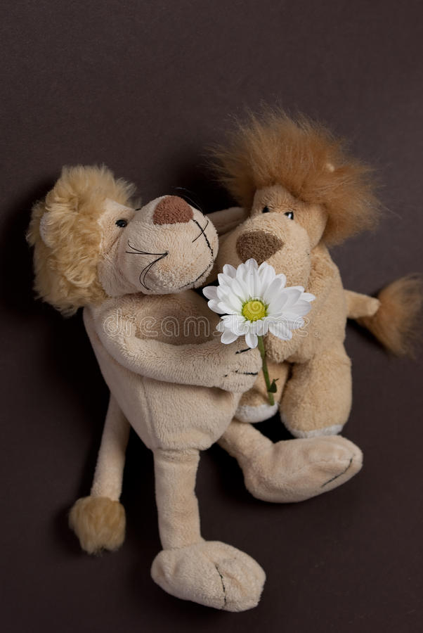 Toy lions. With chrysanthemum isolated stock photos
