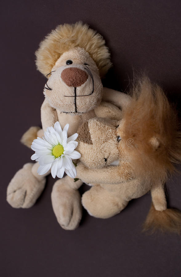 Toy lions. With chrysanthemum isolated royalty free stock photo