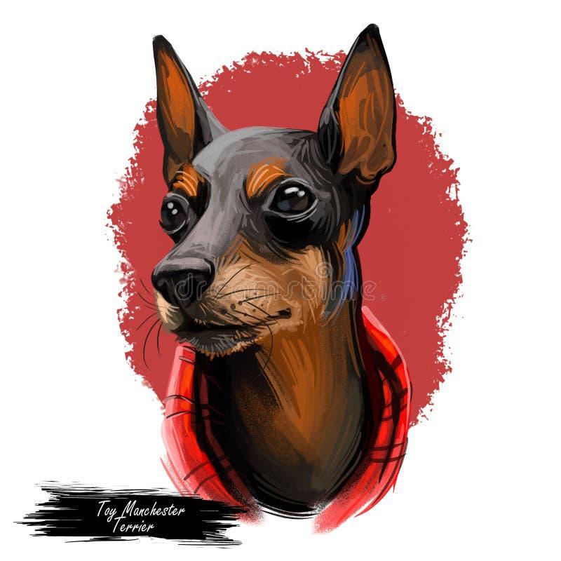 Toy Manchester Terrier-het portret van het hondras op wit wordt geïsoleerd dat Digitale kunstillustratie, dierlijke getrokken wat vector illustratie