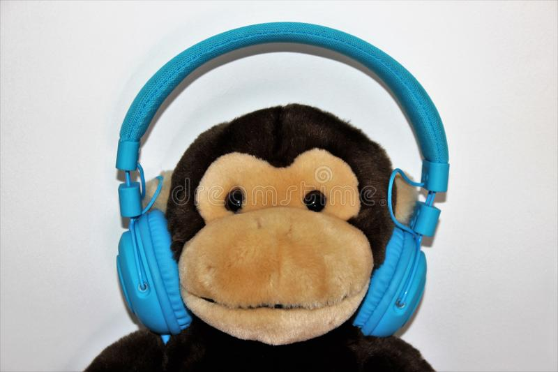 Toy monkey with headphones on. Listening to music royalty free stock photos