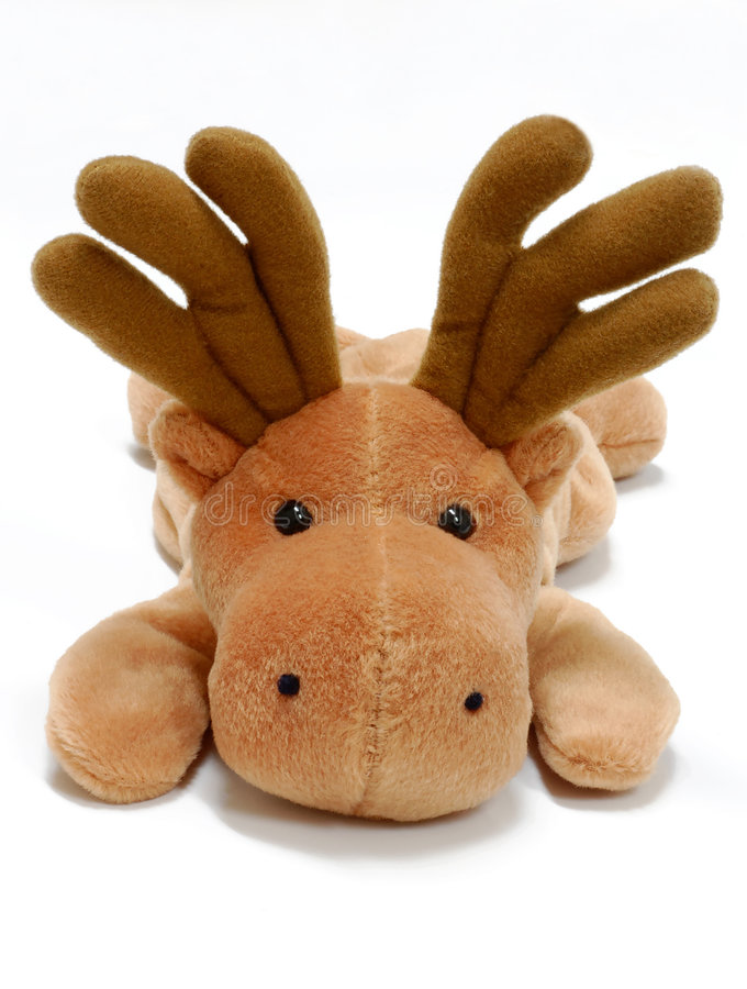 Toy Moose. Stuffed moose toy on a white background royalty free stock images