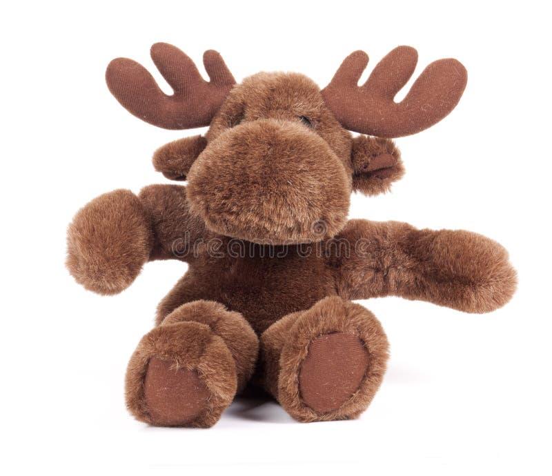 Toy Moose. Plush toy moose on white background royalty free stock photography