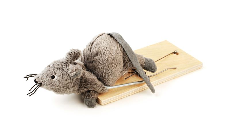 Toy mouse in a mousetrap isolated royalty free stock images