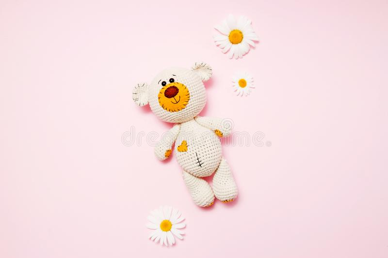 Toy teddy bear with daisies isolated on a pink background. Baby background. Copy space, top view royalty free stock image