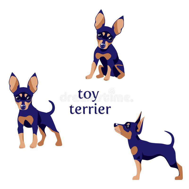 Toy Terrier black. Vector illustration of Toy Terrier in various poses in flat design vector illustration