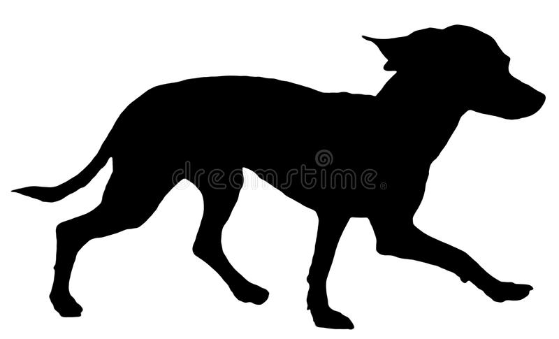 Toy Terrier silhouette stock photo