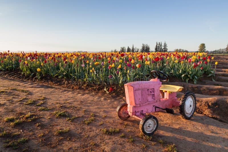 Toy Tractor avec des tulipes image libre de droits