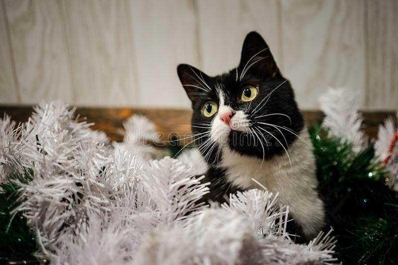 Toys on the Christmas tree for the new year. Christmas toys and a black cat. New year. Beautiful holiday royalty free stock image