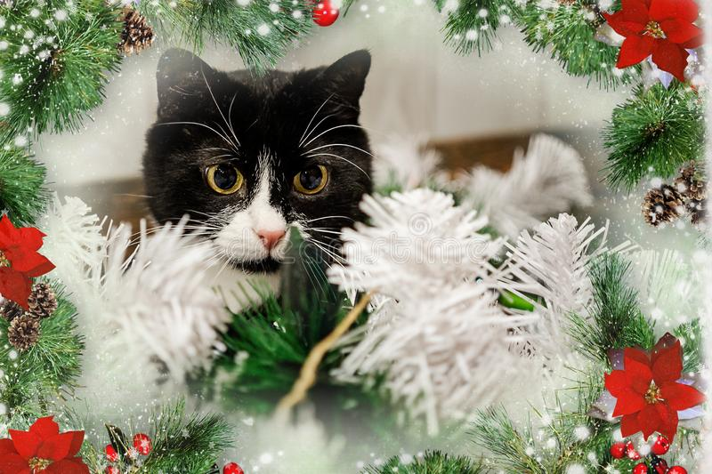 Toys on the Christmas tree for the new year. Christmas toys and a black cat. New year. Beautiful holiday stock photo