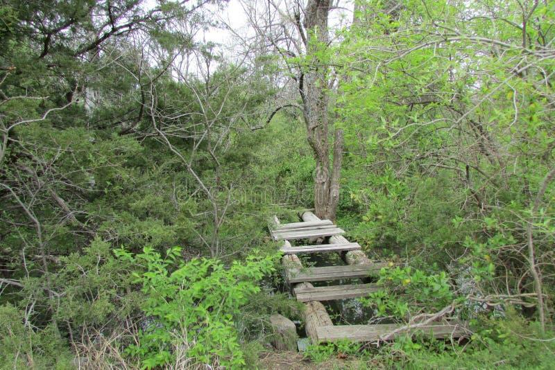 Trä överbrygga i skog arkivfoton