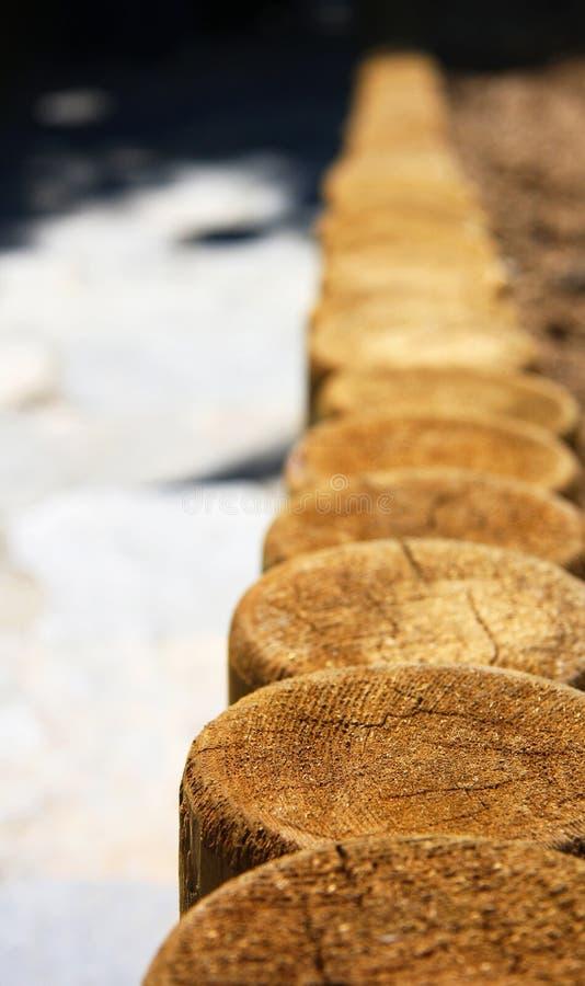 trä royaltyfri bild